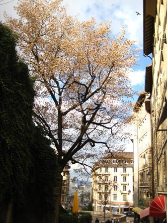 日內瓦舊城區