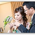 Wedding-1 (309)