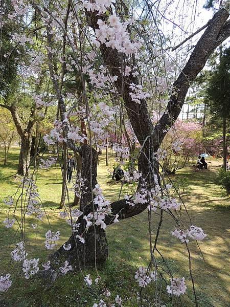 2012關西遊 311