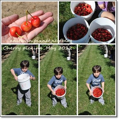 Cherry picking -1