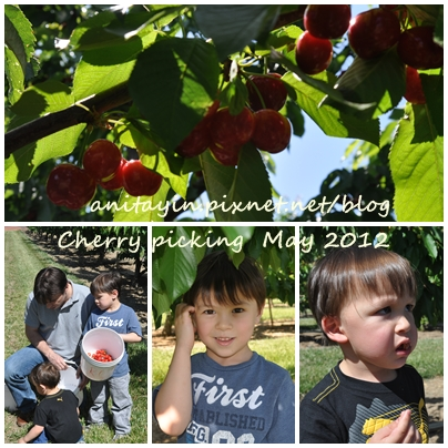 Cherry picking -2