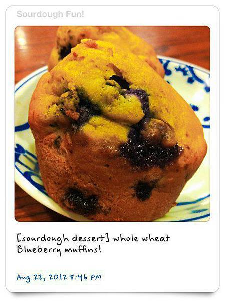 Sourdough MUFFINS﹣ BLUEBERRY
