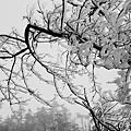 台中,思源埡口,樹冰