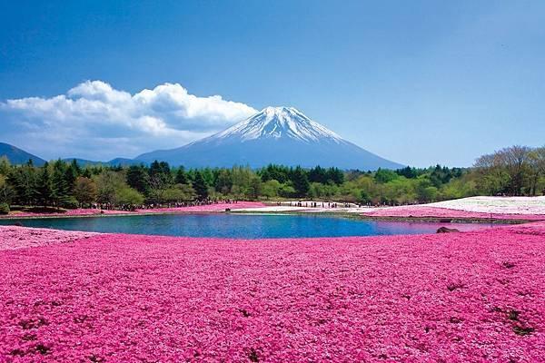 富士芝櫻祭2016
