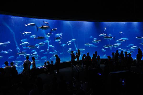 東京親子自由行景點葛西臨海水族園