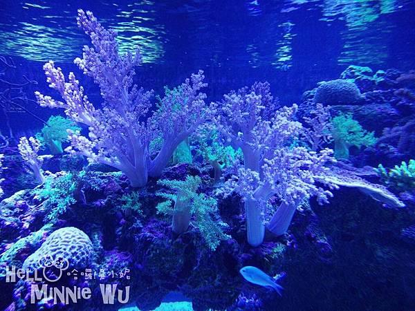 墨田水族館珊瑚