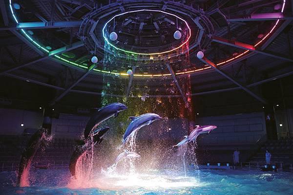 愛普生品川水族館海豚秀