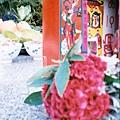 農曆七月七-七仙女/Diana mini