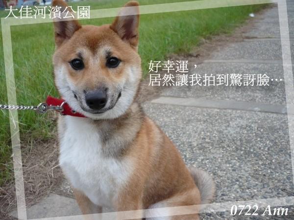 20070722 大佳河濱.jpg
