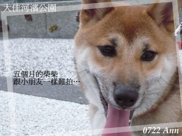20070722 大佳河濱2.jpg
