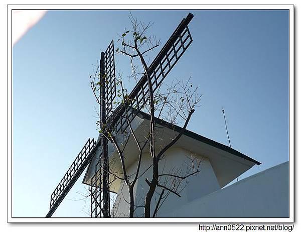 080907 風車的故鄉 我喜歡的樹跟風車