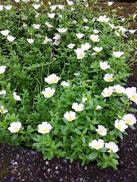 2012-05-27-11-13-34_photo