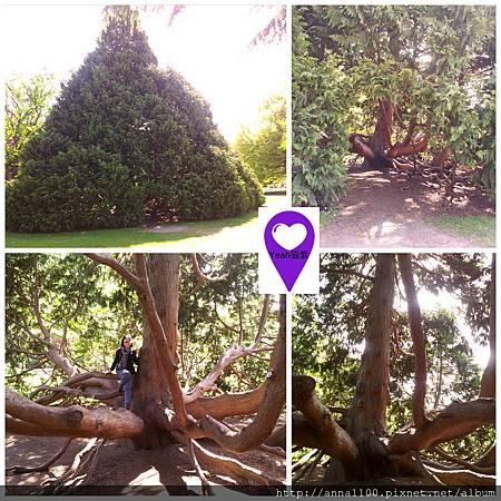 New Zealand tree.jpg