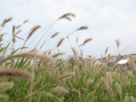 沿途風景.JPG
