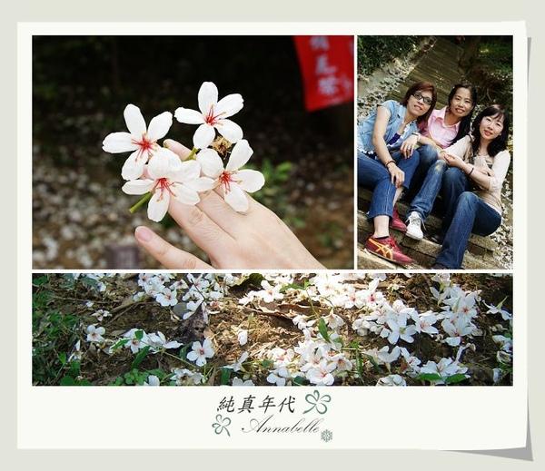 油桐花17.jpg