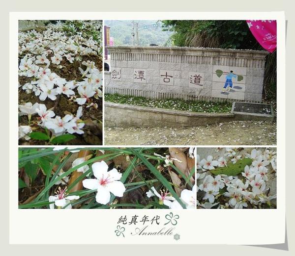 油桐花23.jpg