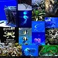 20140929-9洋博公園-深海魚2.jpg