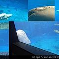20140929-10洋博公園-鯨鯊.jpg