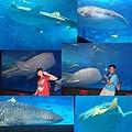 20140929-11洋博公園-鯨鯊2.jpg