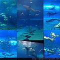 20140929-12洋博公園-其他魚類.jpg