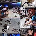 20140929-5海洋博公園-水生動物觸摸.jpg