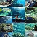 20140929-6海洋博公園-熱帶魚缸.jpg