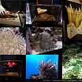 20140929-7海洋博公園-深海有毒魚缸.jpg