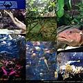 20140929-8洋博公園-深海魚.jpg