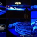 20140929-17美麗海水族館-大王魷魚.jpg