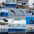 20140929-20海洋博公園-海豚表演.jpg