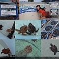 20140929-21海洋博公園-海海龜館.jpg