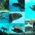 20140929-24海洋博公園-海海龜館.jpg