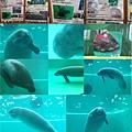 20140929-25海洋博公園-美人魚.jpg