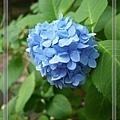 nEO_IMG_P1180504.jpg