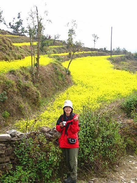 滿山遍野的油菜花田
