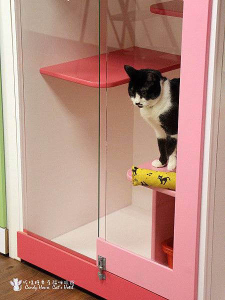 可愛貓貓-阿松