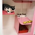 住宿甜蜜房的阿松貓貓生活照