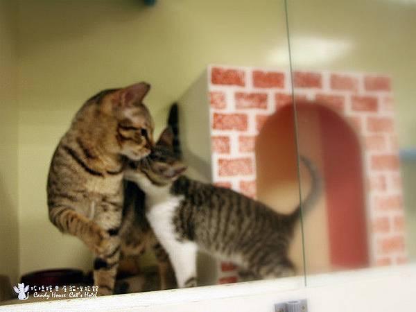 憨吉&寶吉-貓咪長期包月2
