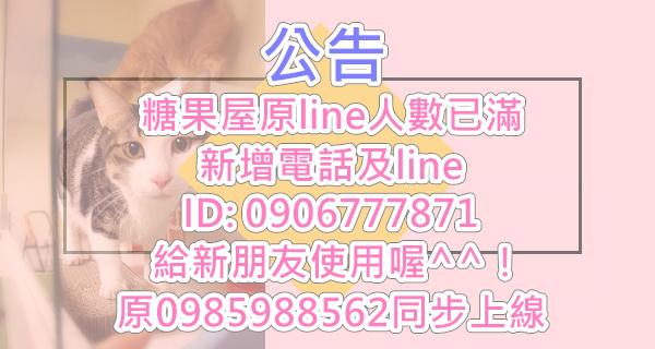 2018糖果屋貓咪旅館0906777871LINEID