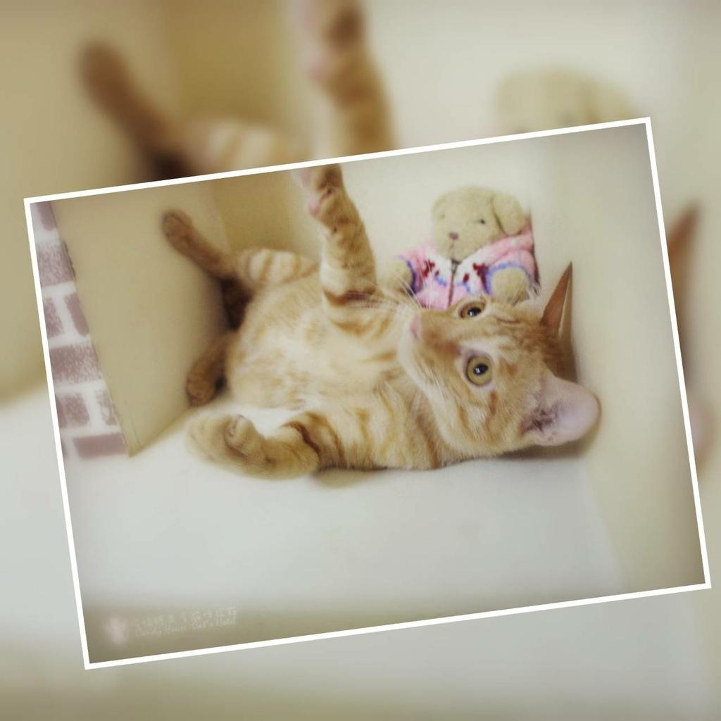 板橋糖果屋貓咪旅館-幸福的多比-0