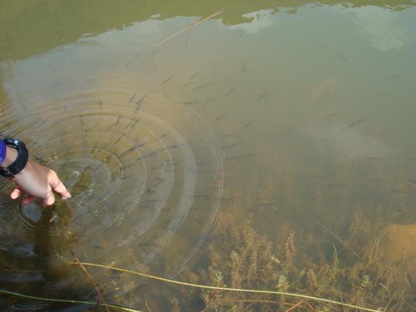 只要手動動魚兒就會游過來.JPG