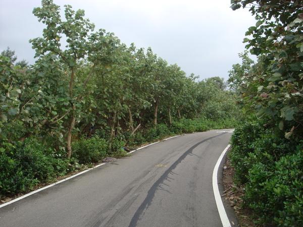 沿途兩邊都是樹木....JPG