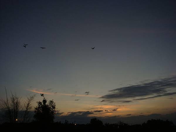 20 天黑得好快,才不到1800,就很暗了;倦鳥也要歸巢了.JPG