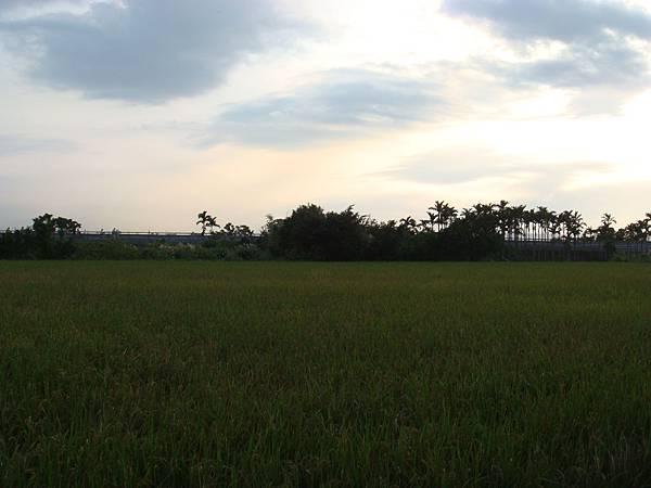 02 淡水附近小徑旁的風景.JPG
