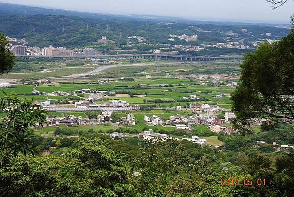 Resize of 芎林桐花步道 045