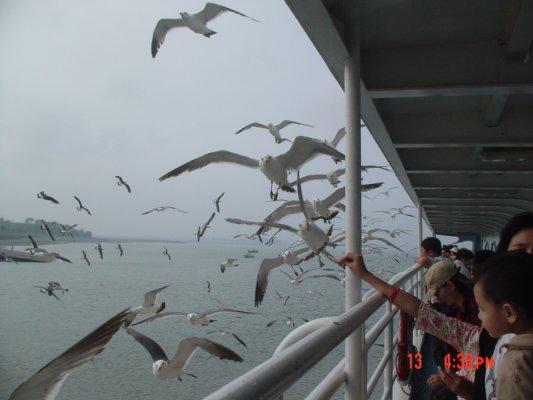 海鷗船.JPG
