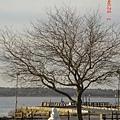 20050106in Bosten (50).jpg