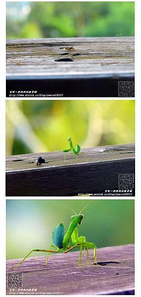 蟲1.jpg