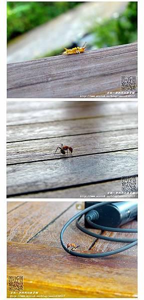 蟲2.jpg
