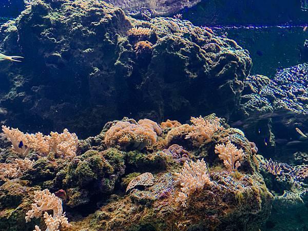 桃園水族館Xpark,桃園水族館,Xpark,水族館,桃園景點